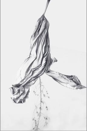 Barbara Kolo - Hibiscus Entwined - 47x33.jpg