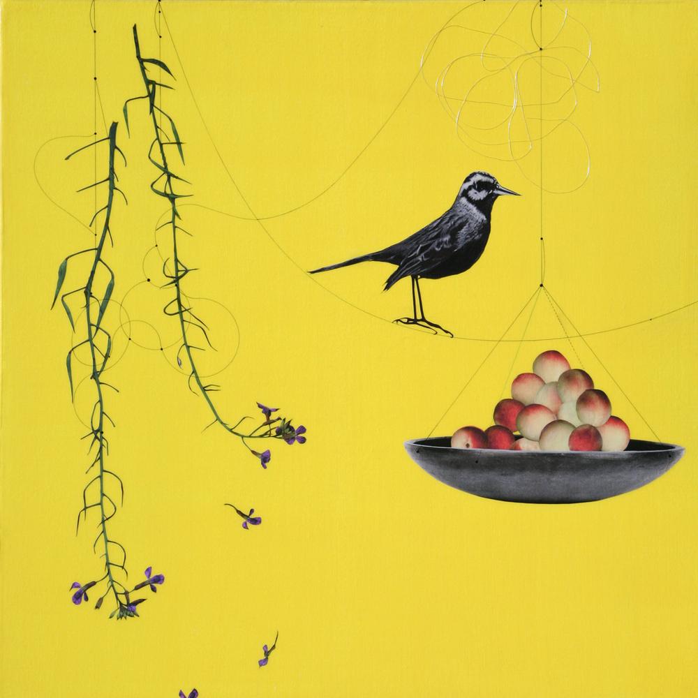 Kaour Mansour - Plum & Bird - 20x20.jpg