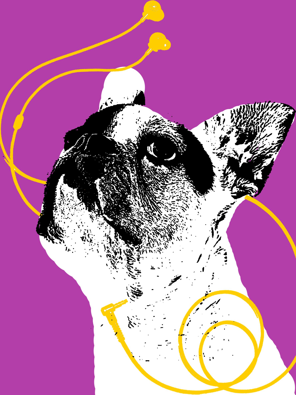 FrenchBulldogmusic.jpg