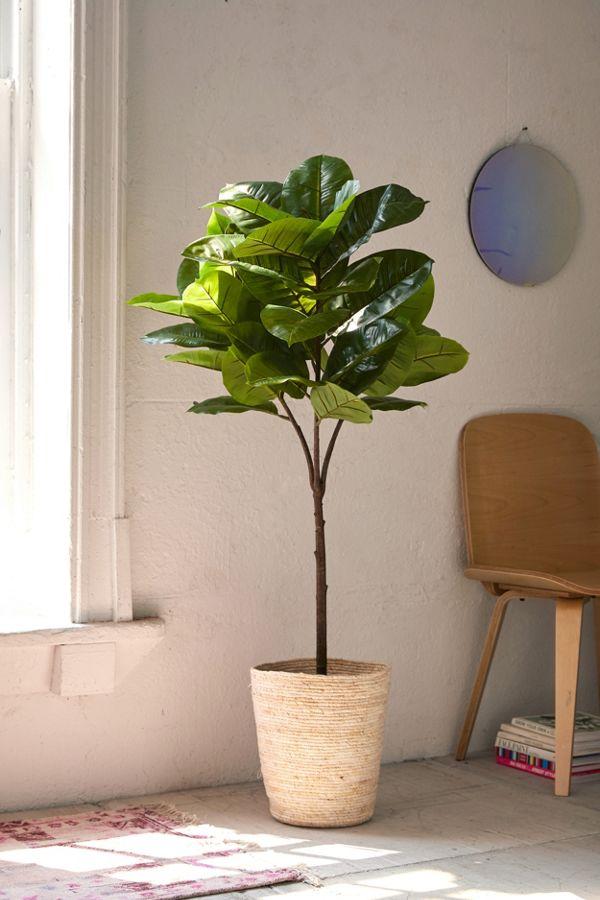 plant 4.jpeg