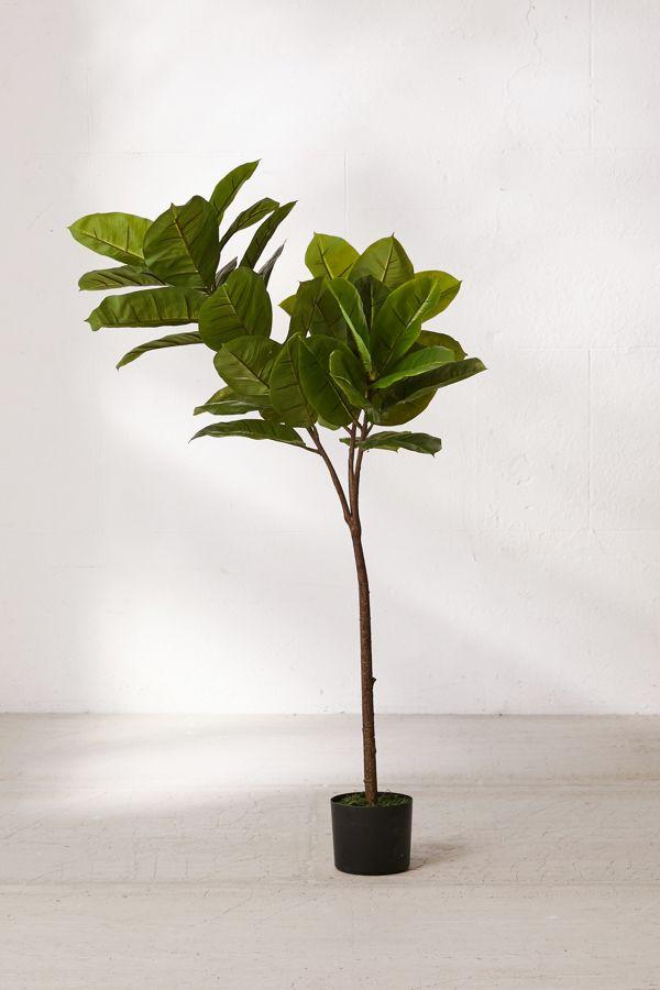 fig tree.jpeg