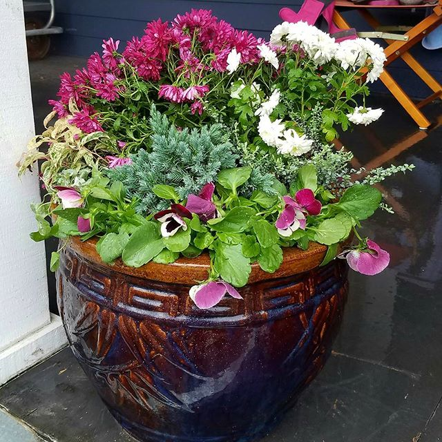 Containers, raised beds and window boxes are often chosen for their easy maintenance reputation or for limited garden spaces. The real truth is that their usefulness comes with its own heavy issues sooner or later. Read Vivian's tips on container maintenance in the latest blog post. http://ow.ly/ta7930bw0fV . . . #westseattle #pnwgardening #gardening #urbangarden #instagardenlovers #gardensofinstagram #gardenlove #westseattlegardentour #containergarden #westseattlegardentour