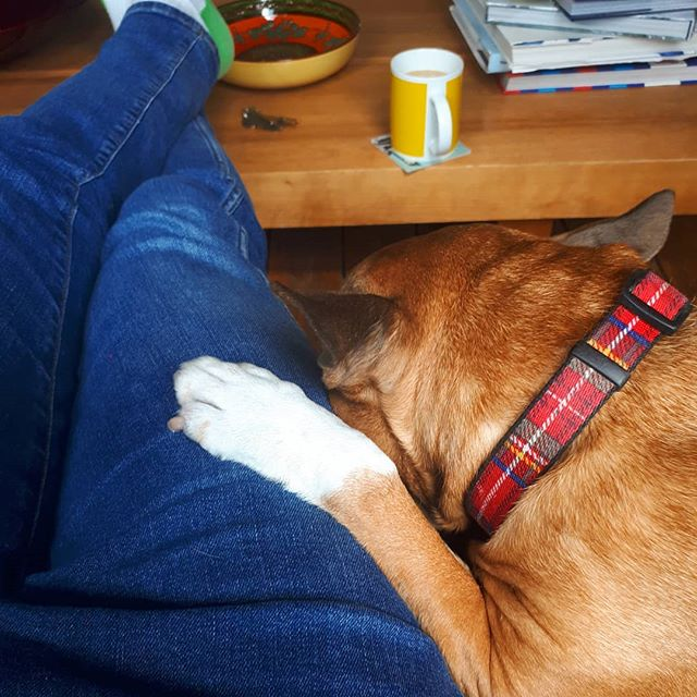 Sunday #remydog #tinyfox #orangeisthenewblack #whitesox