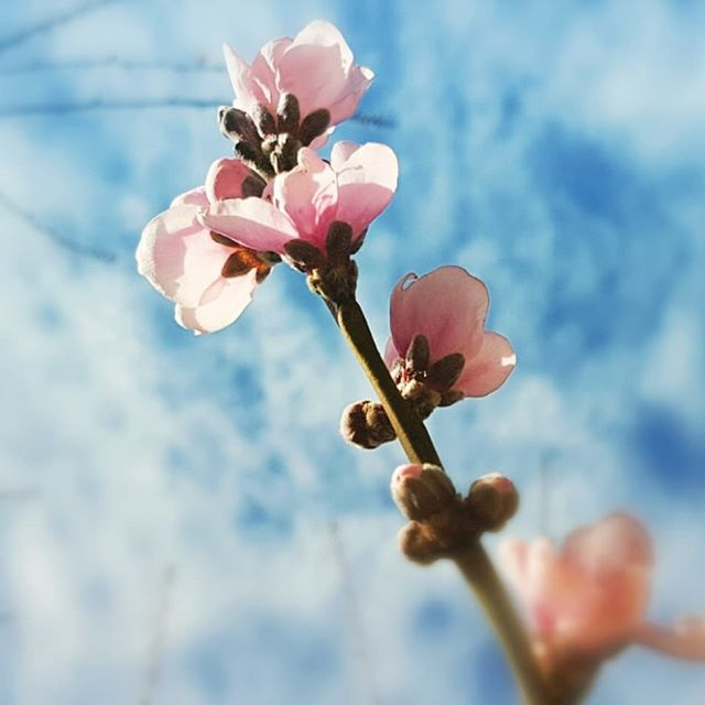 Morning! #summer #fruit #tree #blossom #itsgonnabeabrightsunshinyday