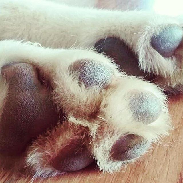 Feet floofs . . . . . #paws #sleepy #dogsofinstagram