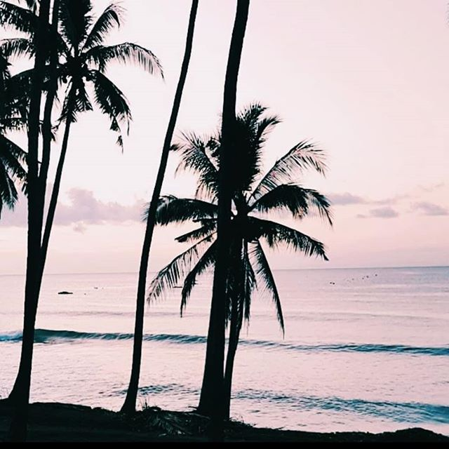 Wish you were Wednesday. #midweek #madeit #palm #sunrise #snap #Bali #throwback