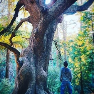 Aaron_Michael_Pine_Shaman_tree_01.jpg