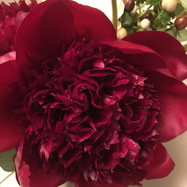 You are so beautiful to me! #infullbloom #dahlias #brides #flowers
