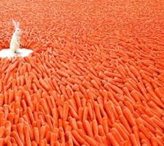 rabbit_and_carrot.jpg