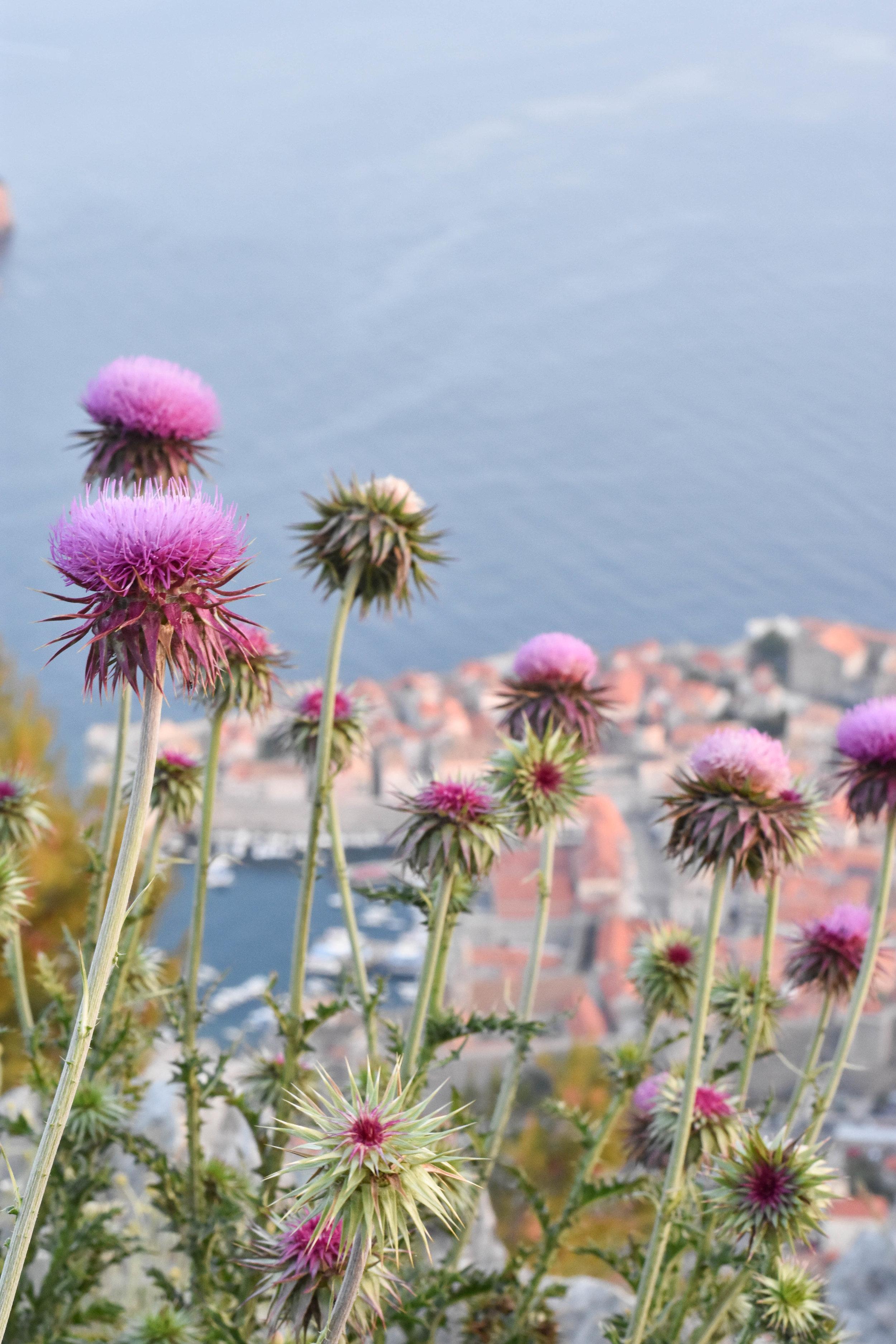 Dubrovnik-34.jpg