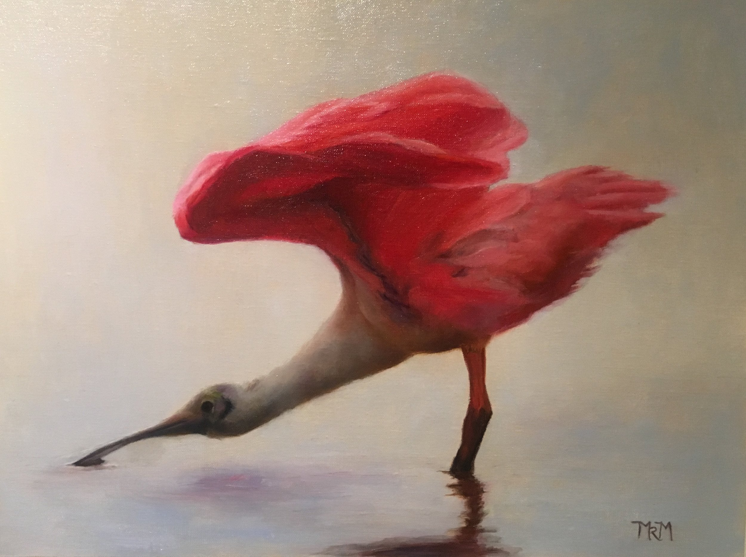 Roseate Spoonbill,  2017, oil on canvas, 12 x 16 in.  Private collection.  Prints available.