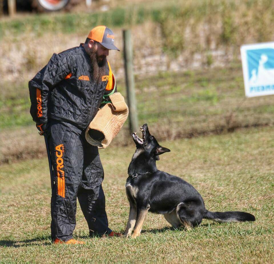 Daniel working V Elsa vom Mack-Zwinger IPO3 SD1 KKL, owned by Karen DeCoste, in a trial at Piedmont Schutzhund Club