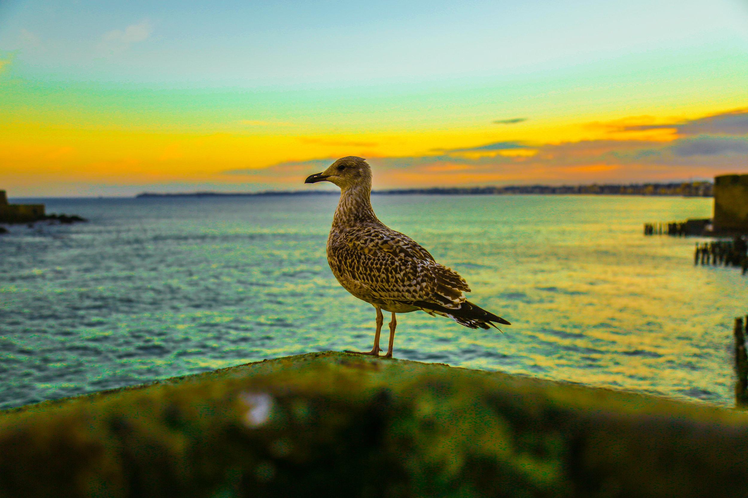 BirdbyWater.jpg