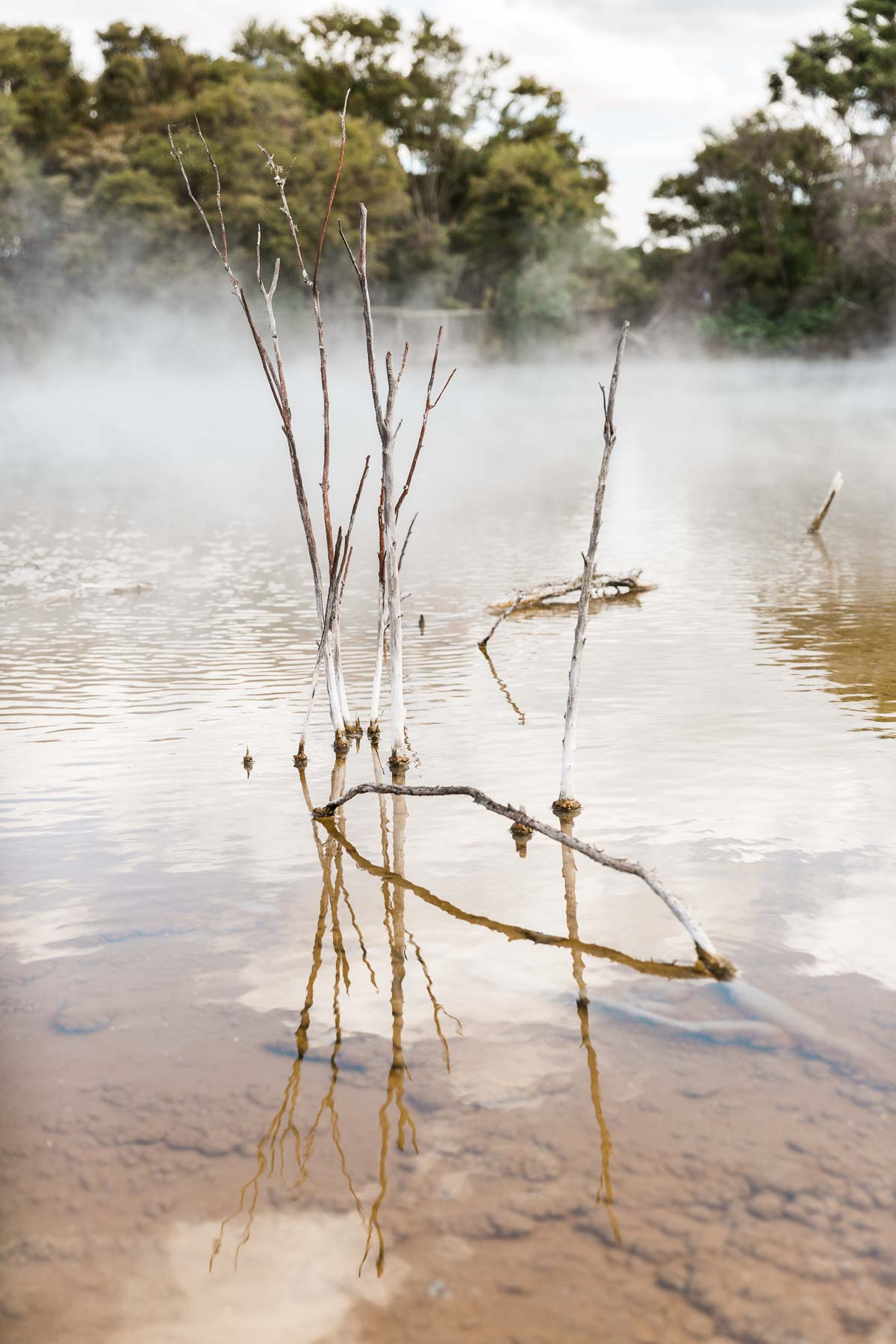 kuirau-park-rotorua-geothermal-activity-hot-water-north-island-new-zealand-amalia-bastos.jpg