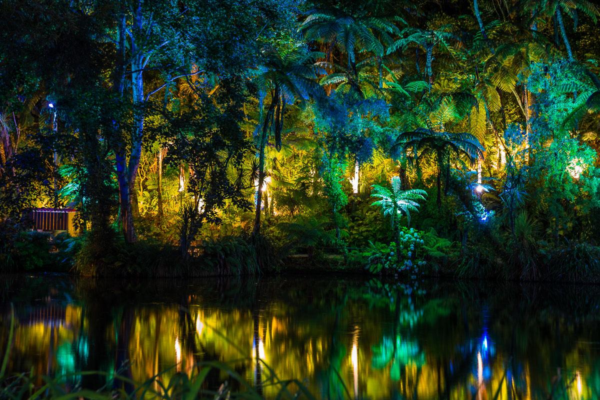 Pukekura-park-festival-lights-new-plymouth-evening-summer-TSB-new-zealand.jpg