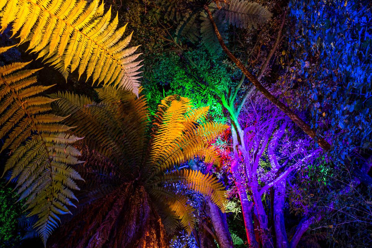 festival-lights-TSB-pukekura-park-new-zealand-new-plymouth-nz-travel-summer.jpg