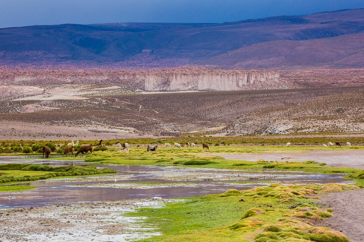 llama-valley-landscape-bolivia-bolivian-green-purple-herd-farming-farmland-rural-countryside.jpg