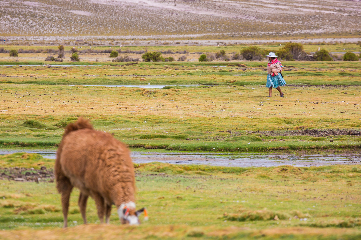 traditional-bolivian-lady-woman-person-shepherd-llama-grazing-travel-photographer-bolivia.jpg