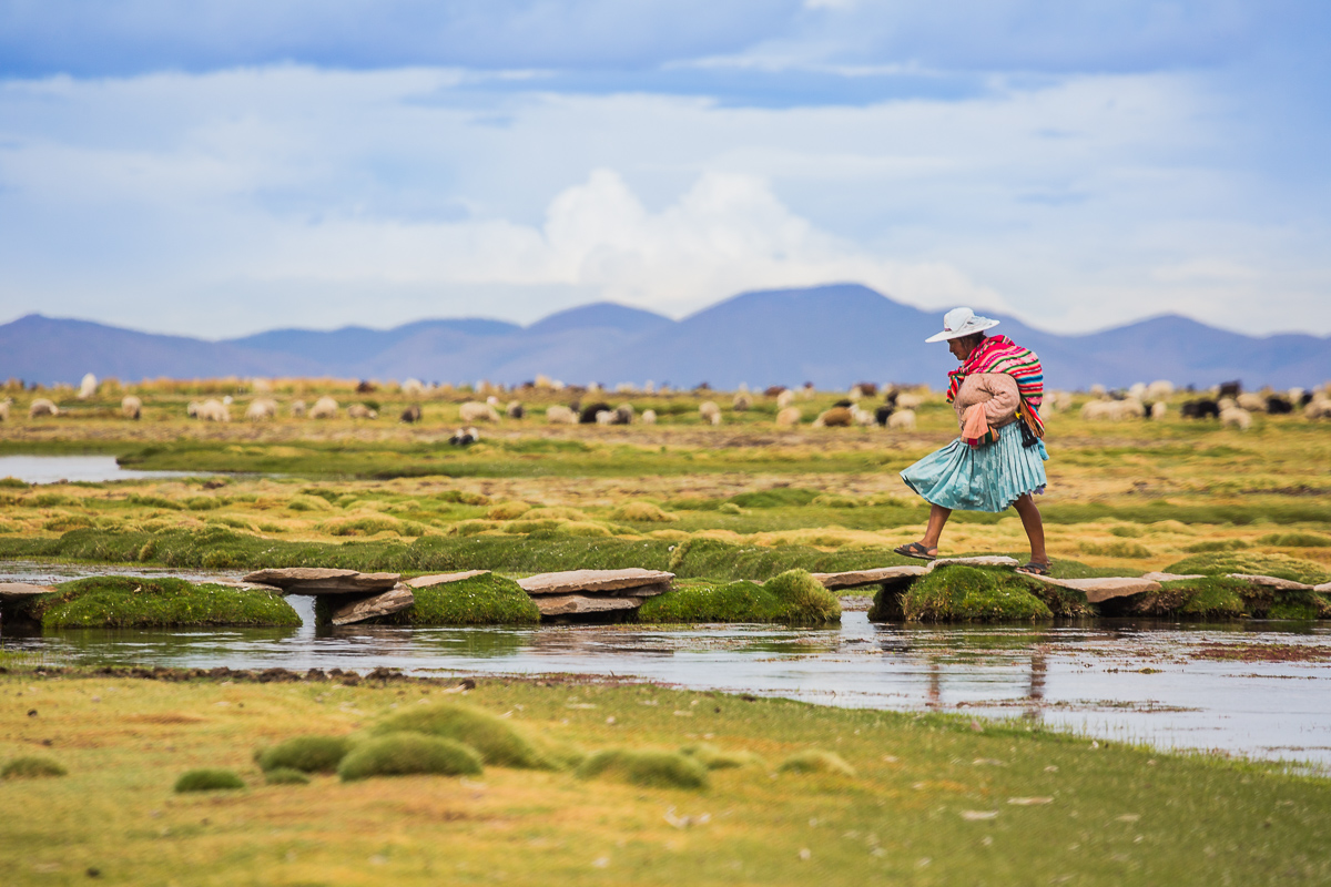 traditional-bolivia-shepherd-woman-lady-walking-bridge-llama-pasture-llamas-herd-farming-country-rural-travel-workshop.jpg