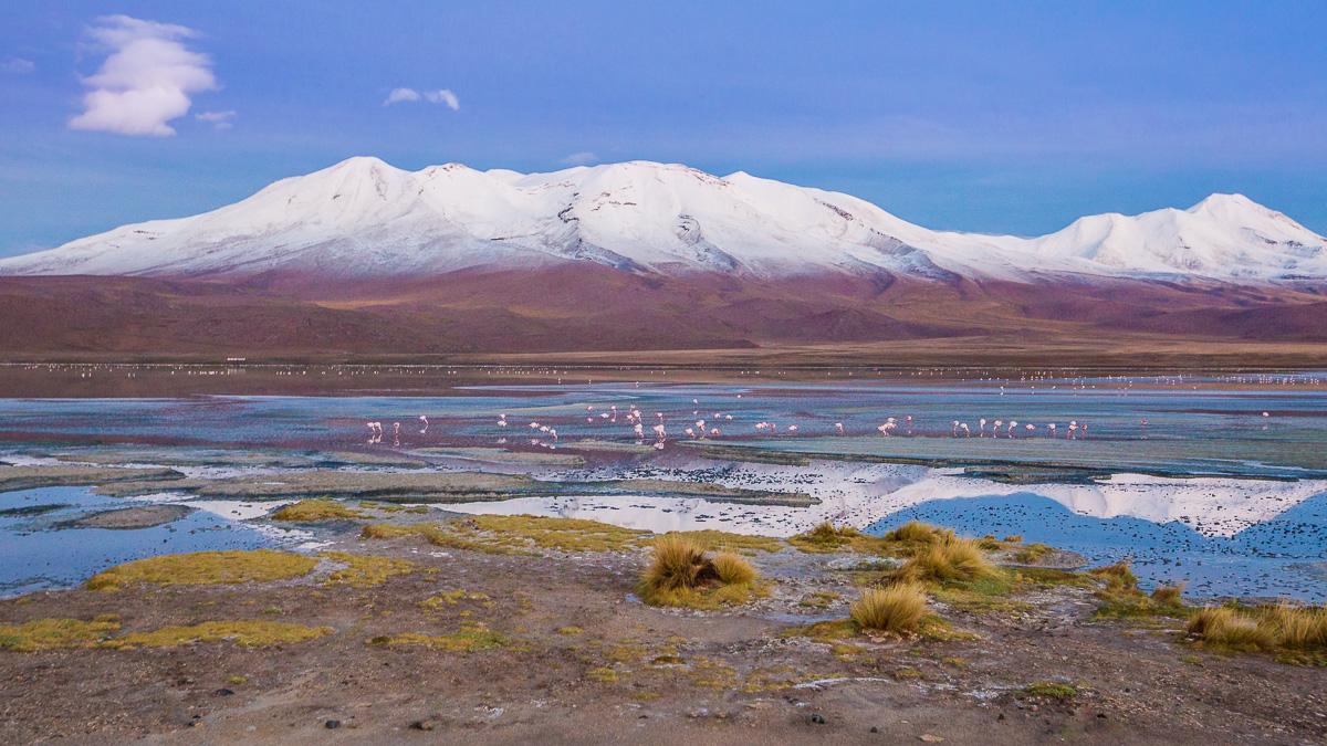laguna-hedionda-hotel-los-flamencos-ecolodge-bolivia-altiplanicas-lagoons-eduardo-abaroa-national-reserve-flamingo.jpg
