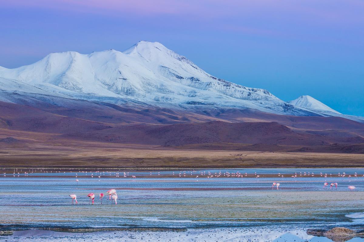 national-reserve-eduardo-avaroa-park-los-flamencos-ecolodge-hotel-sunrise-laguna-hedionda-january-bolivia.jpg