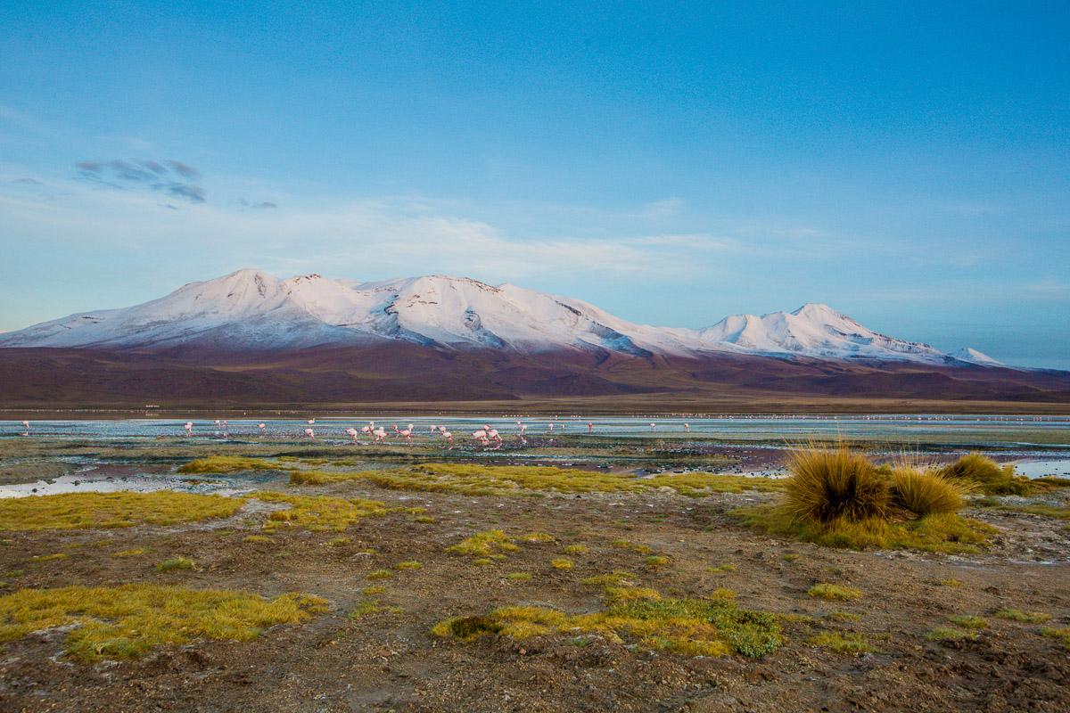 photography-expedition-bolivia-flamingoes-eduardo-avaroa-national-reserve-andean-fauna-sunrise-lake-lagoon.jpg