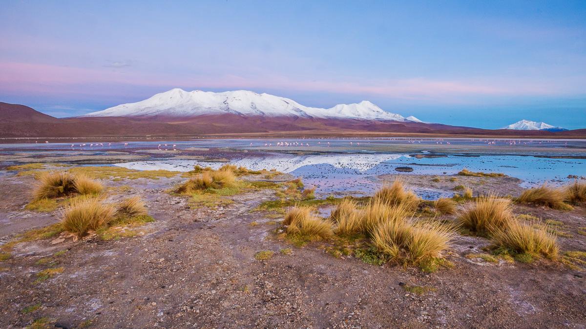 sunrise-flamingoes-hotel-ecolodge-los-flamencos-bolivia-south-america-flamingos-wild-wildlife-photography.jpg