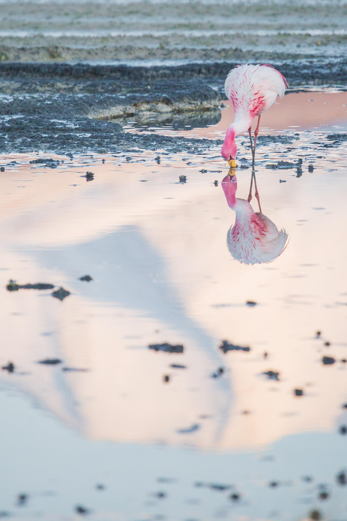 sunrise-flamingo-reflection-eduardo-avaroa-national-reserve-bolivia-ecolodge-travel-photographer.jpg
