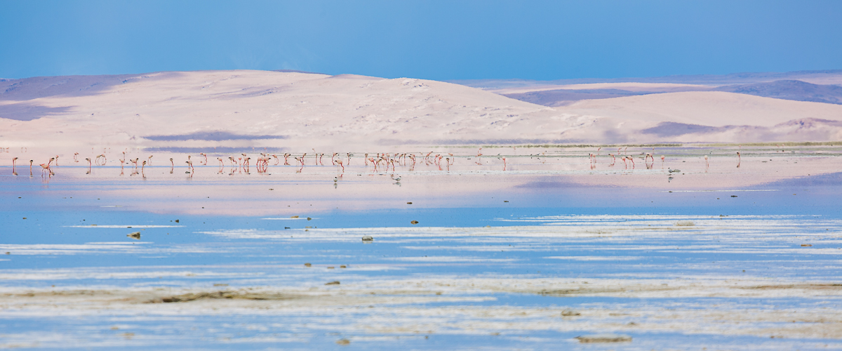 lagoon-flamingoes-bolivia-south-america-panorama-photography-expedition-travel-flamingos-wildlife-trip-adventure.jpg