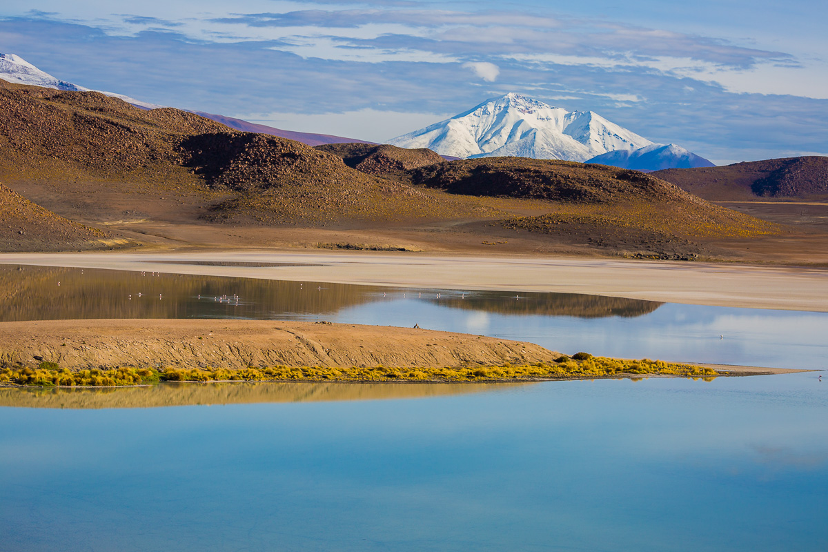 laguna-honda-bolivia-eduardo-avaroa-national-park-lagoons-photography-flamingo-location-wildlife-fauna-andean-trip.jpg