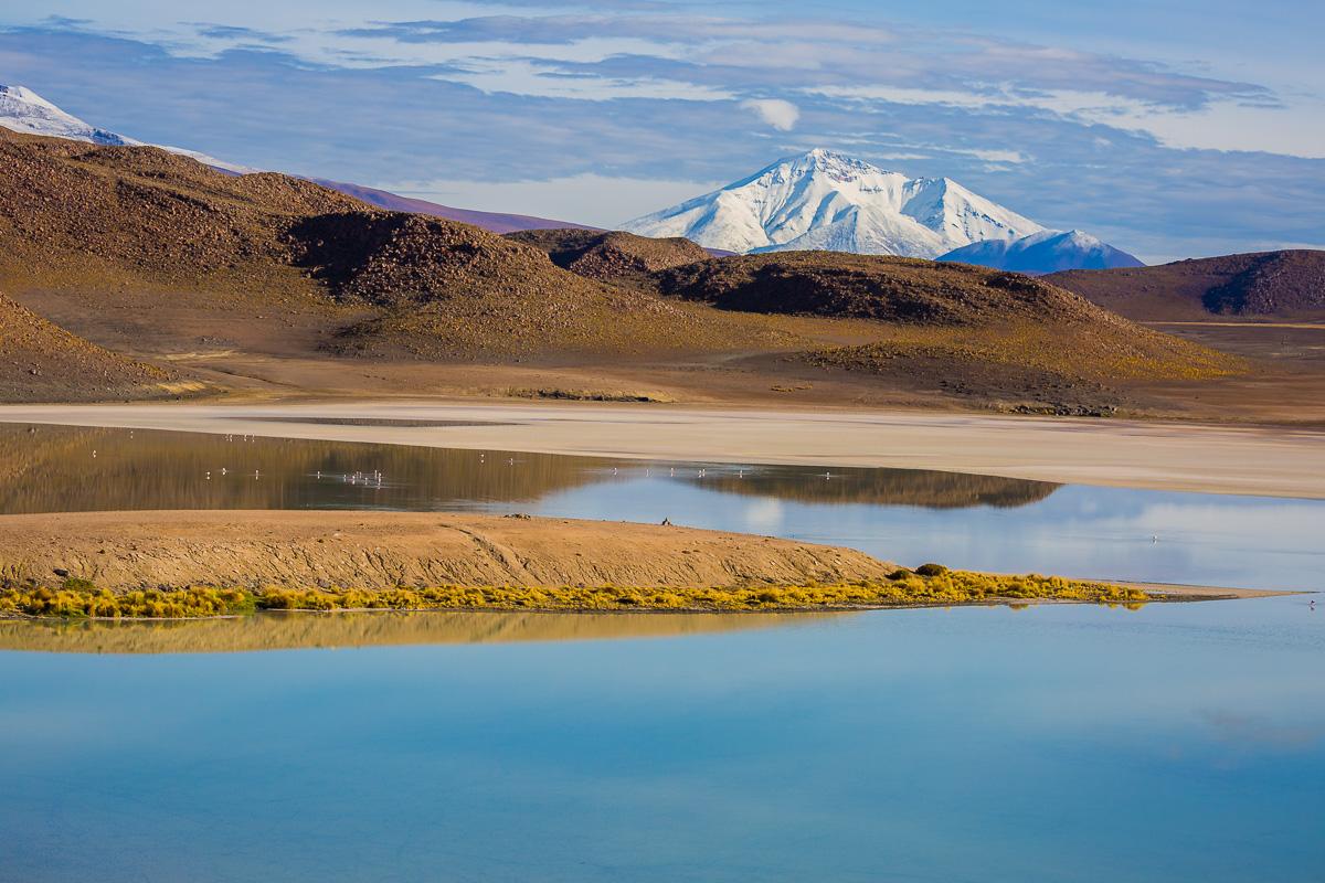 laguna-honda-bolivia-eduardo-avaroa-national-park-lagoons-photography-flamingo-location-wildlife-fauna-andean-trip.jpg
