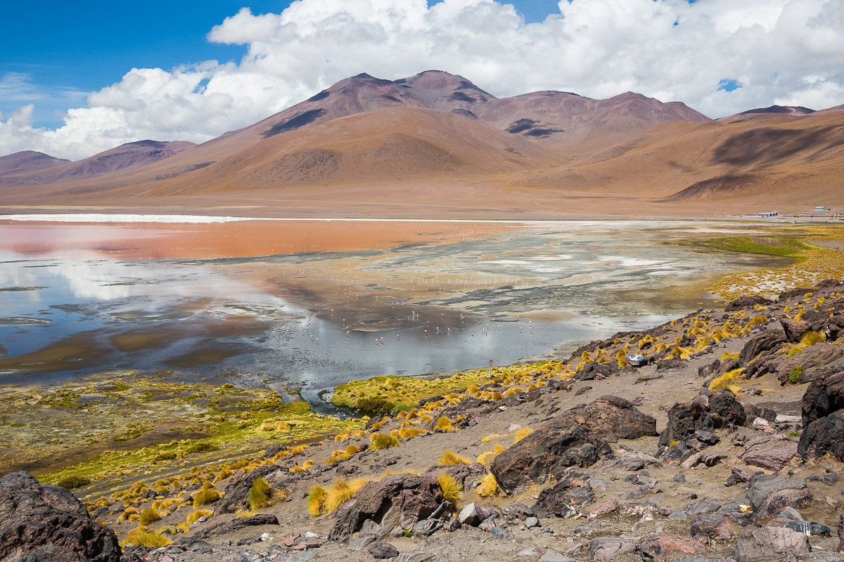 bolivia-travel-eduardo-abaroa-national-reserve-andean-fauna-laguna-colorada-flamingoes-red-lagoon-pink-water-color.jpg