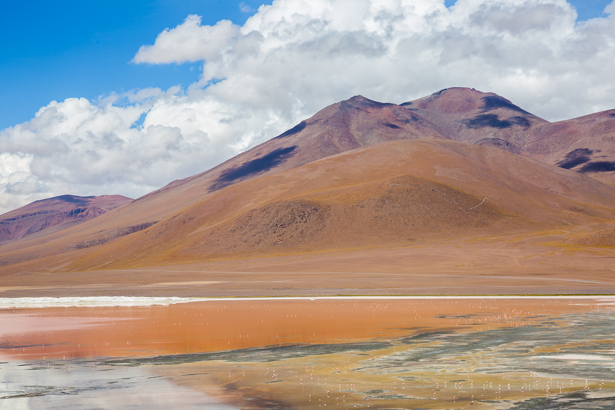 bolivia-travel-expedition-eduardo-abaroa-avaroa-laguna-colorada-red-lake-lagoon-flamingoes-flamingos-trip-wildlife.jpg