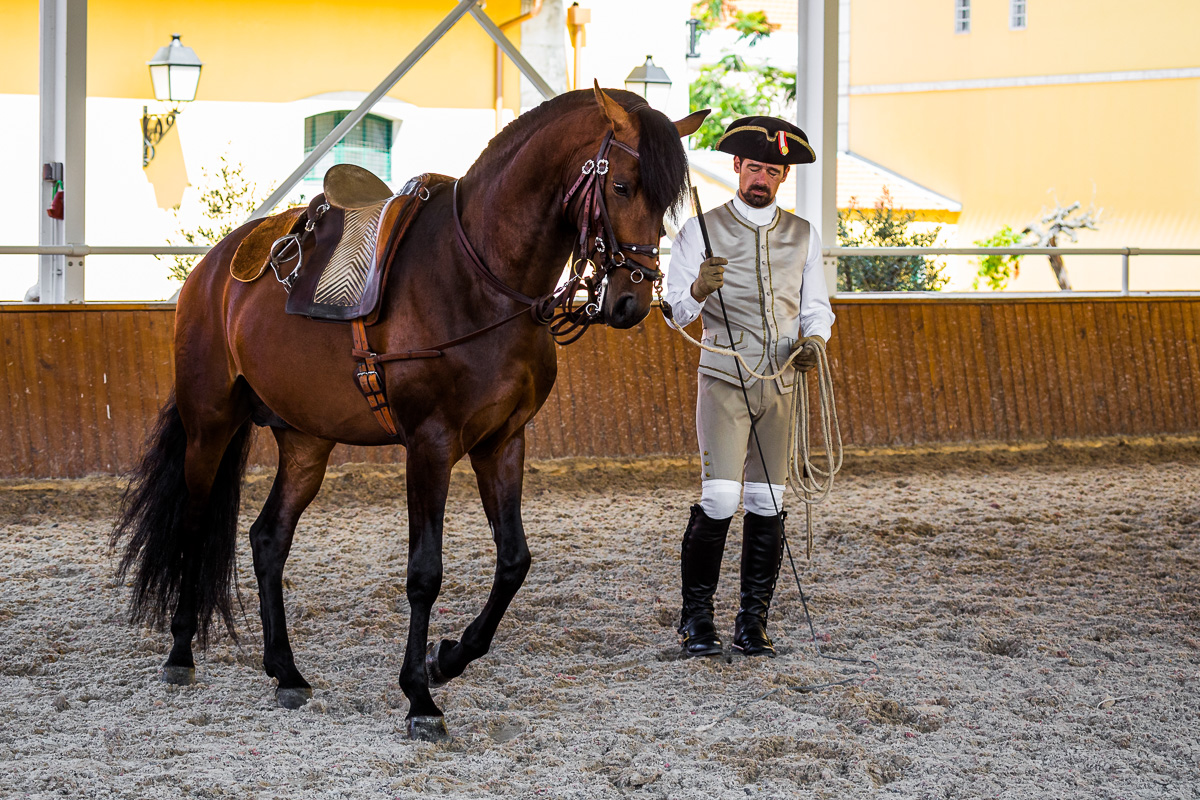 dressage-lusitano-horse-training-escola-portuguesa-da-arte-equestre-equestrian-school.jpg