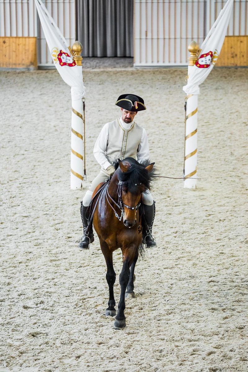 dressage-horse-practice-equestrian-art-picadeiro-lusitano-trot-canter-lisbon-lisboa-travel-lisbon-lisboa.jpg