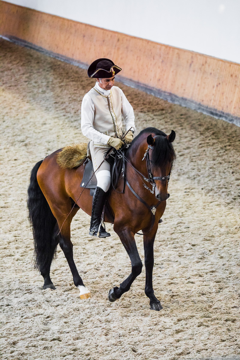 equestrian-art-school-dressage-training-presentation-morning-picadeiro-lusitano-horse-lisbon-travel-tourism.jpg