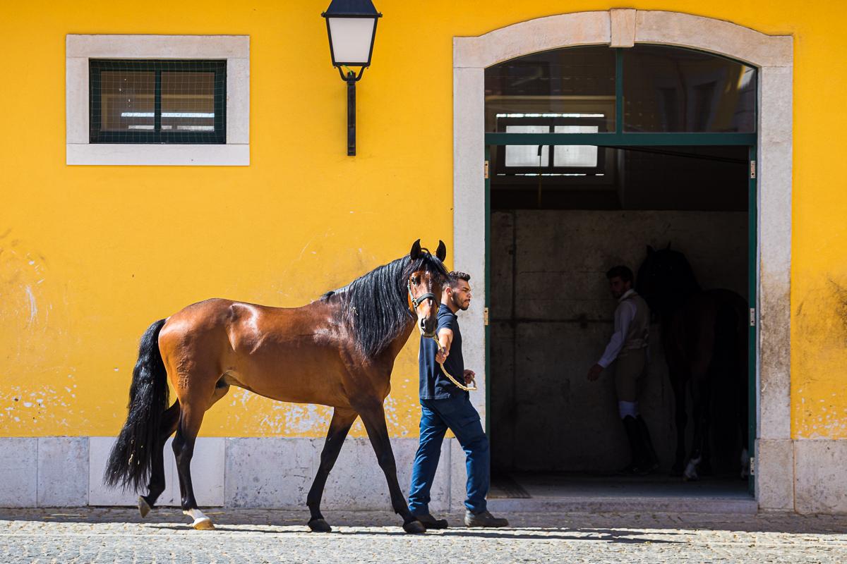 dressage-school-escola-portuguese-da-arte-equestre-equestrian-art-lusitano-horse-stables.jpg