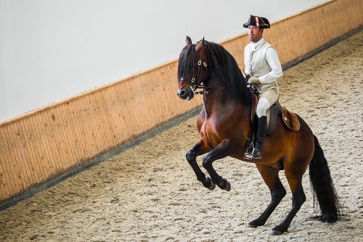 horse-lusitano-equestrian-art-dressage-presentation-escola-arte-equestre-practice-portugal-tourism.jpg