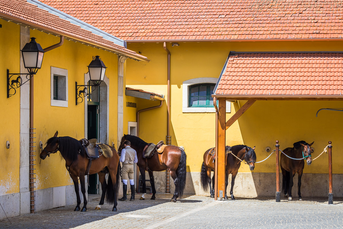 stables-dressage-escola-portuguesa-da-arte-equestre-equestrian-school-training-groom.jpg