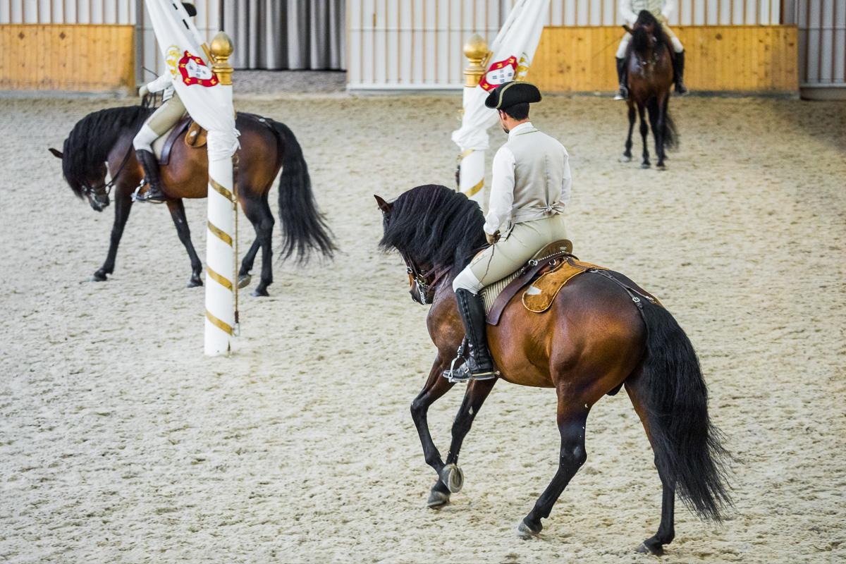 tourism-portugal-lisbon-lisboa-walk-trot-lusitano-horse-practice-training-dressage-equestrian-art.jpg