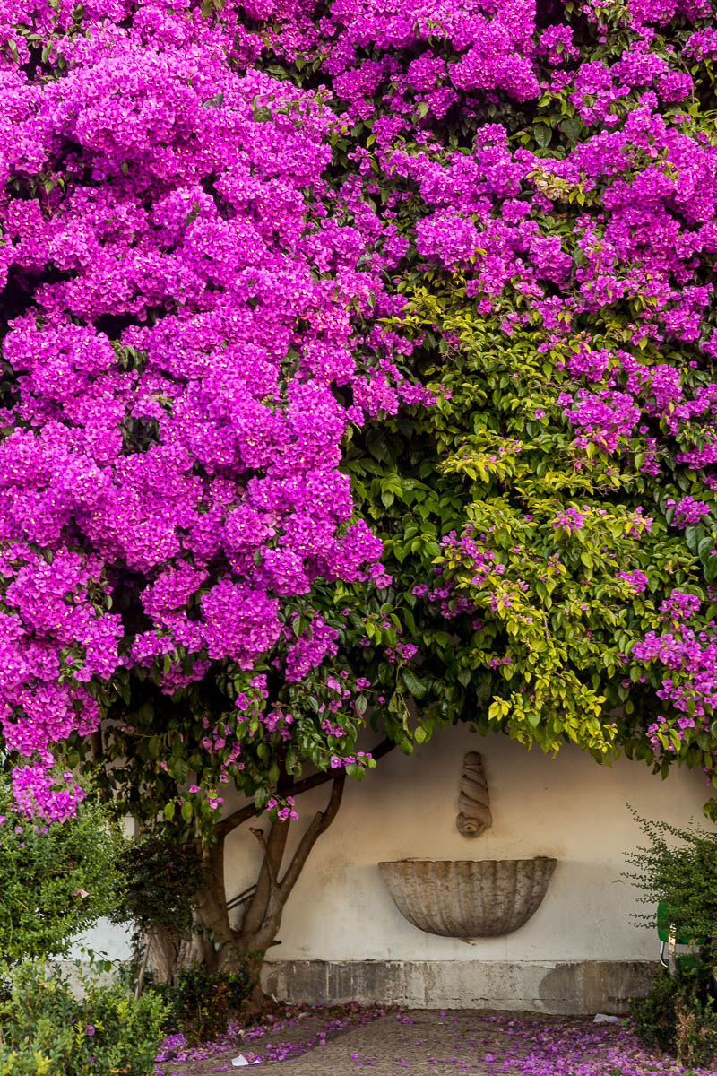 miradouro-santa-luzia-bougainvillea-flowers-pink-lisbon-lisboa-detail-wall-city-morning.jpg