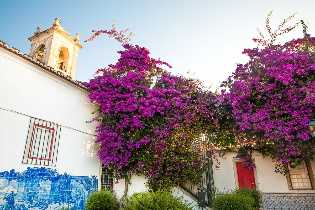 sunrise-miradouro-santa-luzia-bougainvillea-flowers-golden-light-morning-lisbon-lisboa.jpg