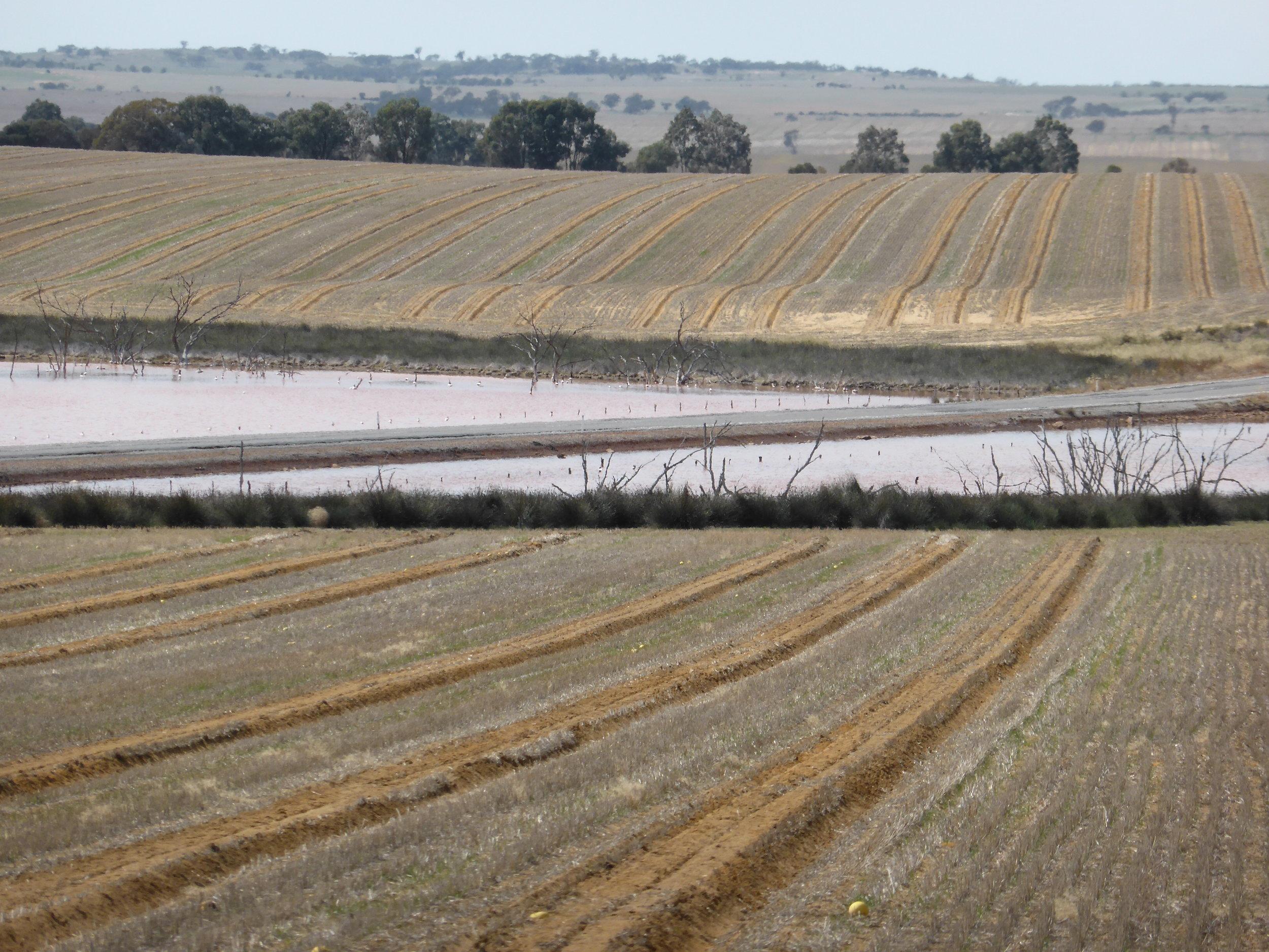 wheatbelt-south-moving-sheep.jpg