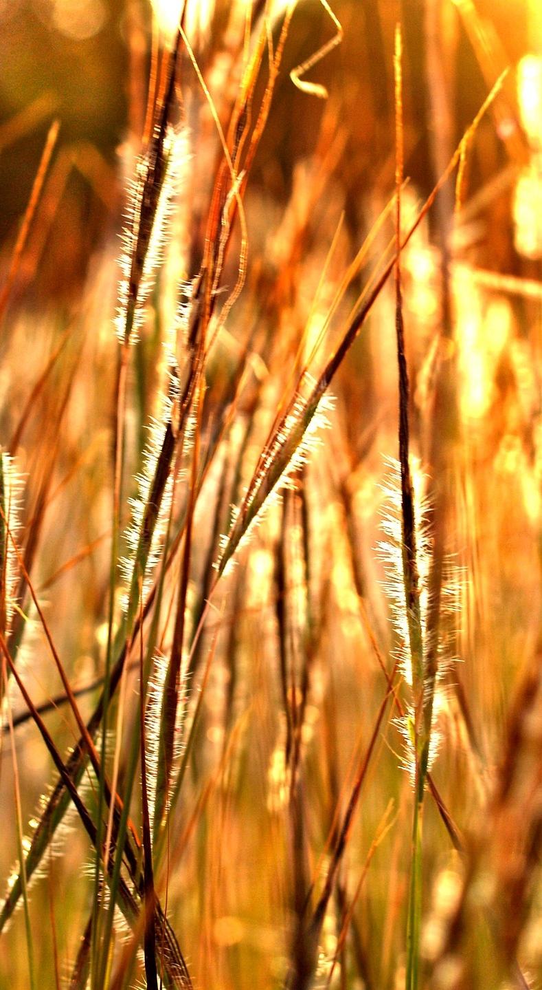 autumn-1551706_1920.jpg
