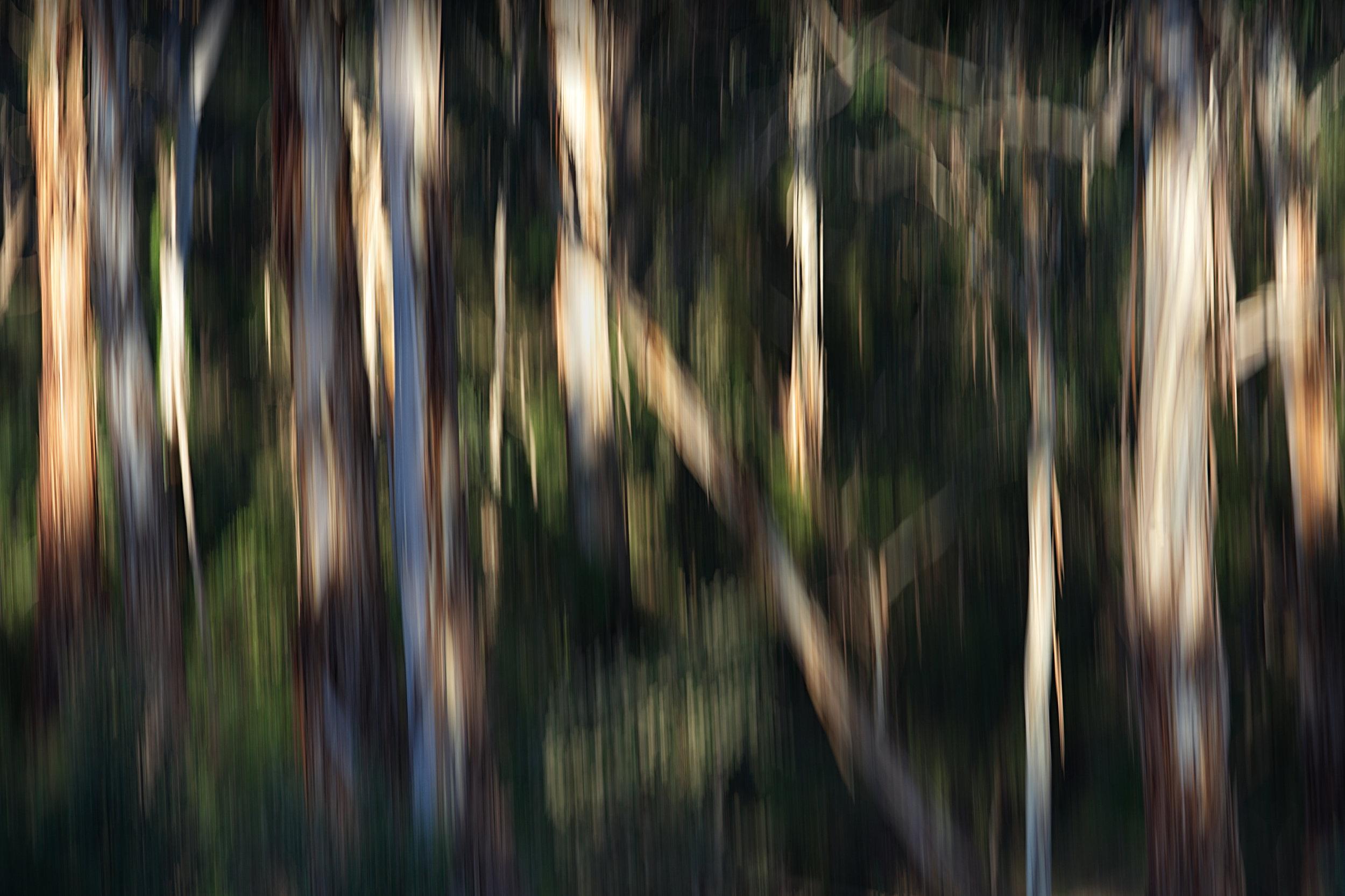 18-12-26-Warrandyte River-SONY-ILCE-7M3-2958 - no border - bw - colour.jpg