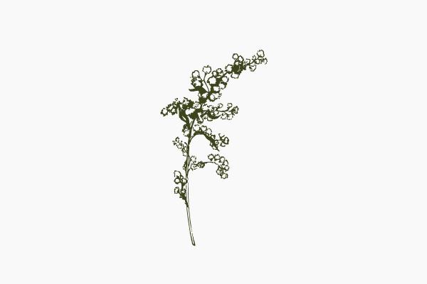 Cassie-Dunmyer-Photography-Goldenrod-Green.jpg