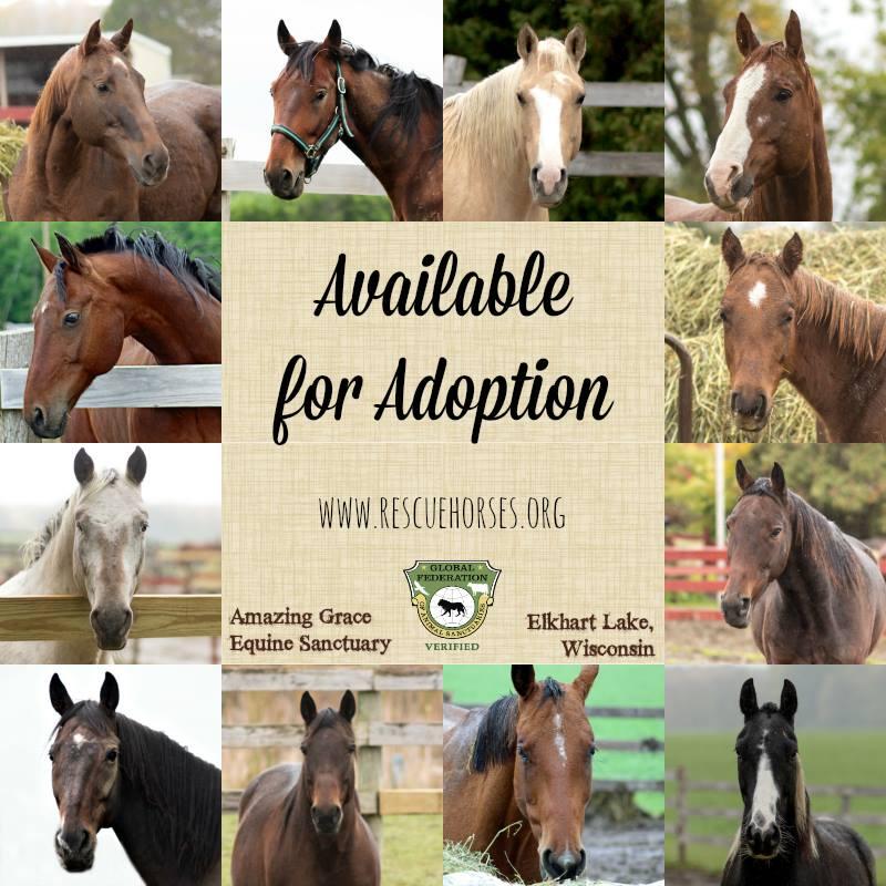 Adoptables10-29-18.jpg