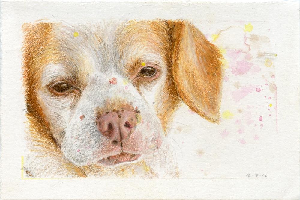 Mixed Breed Dog (Pug, Chihuahua, Beagle)