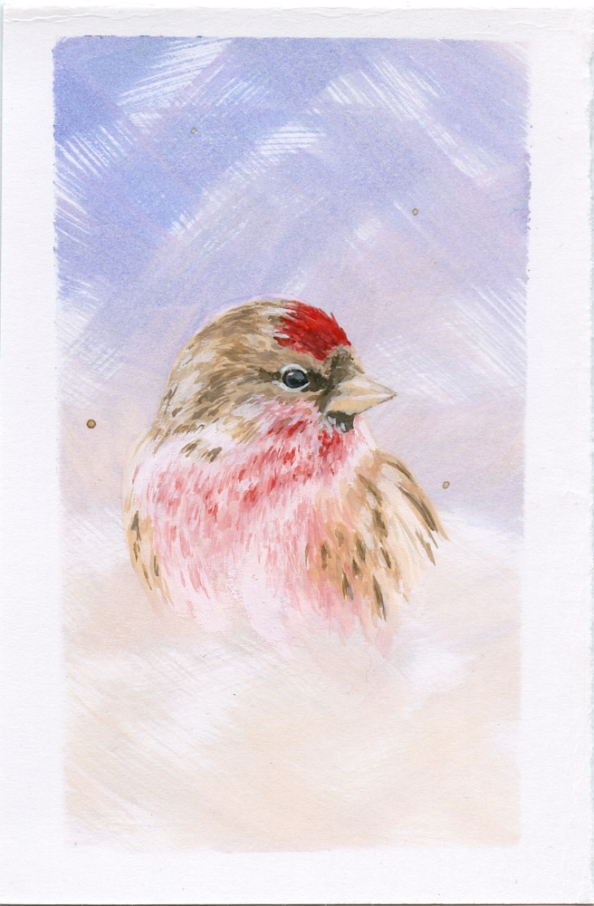 Red Poll