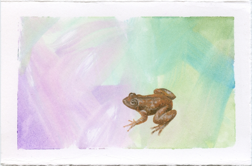 Radcliffe's Night Frog